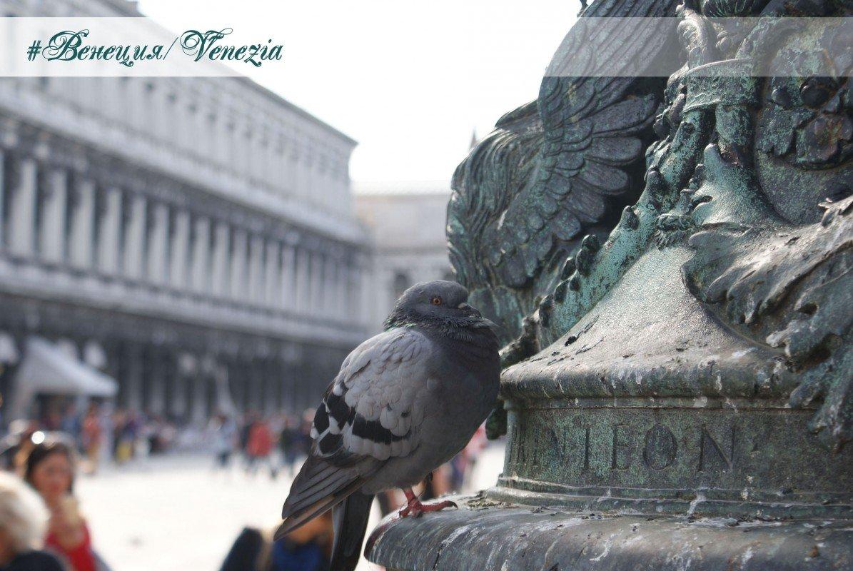 #Венеция/Venezia