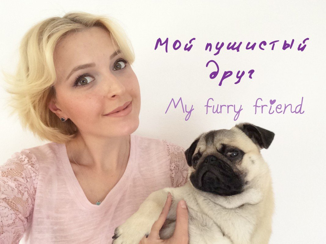Мой пушистый друг ♡ My furry friend Мопс Цёпфик