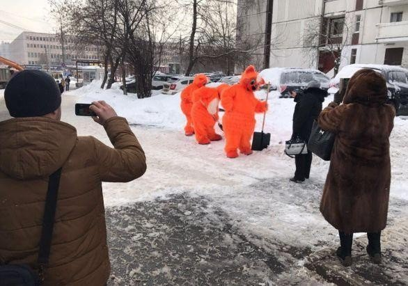 Коты спасут Москву от снега