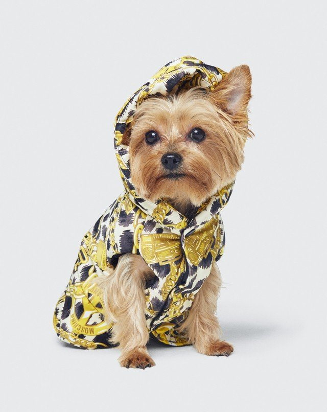 Мода в мире животных или подробности  коллаборации MoschinoxH&M