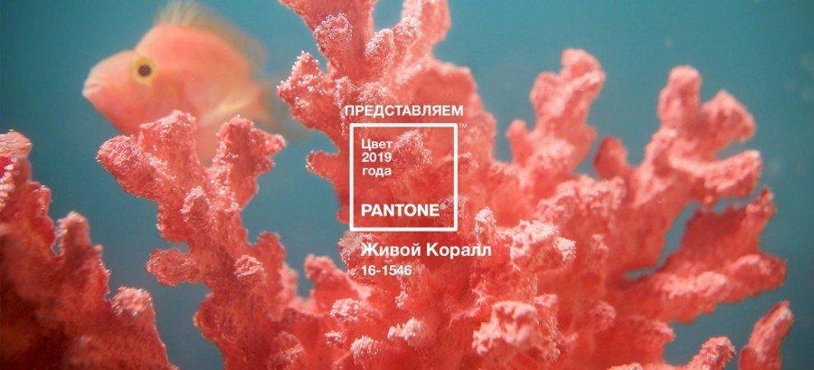 Назван цвет 2019 года по версии Pantone